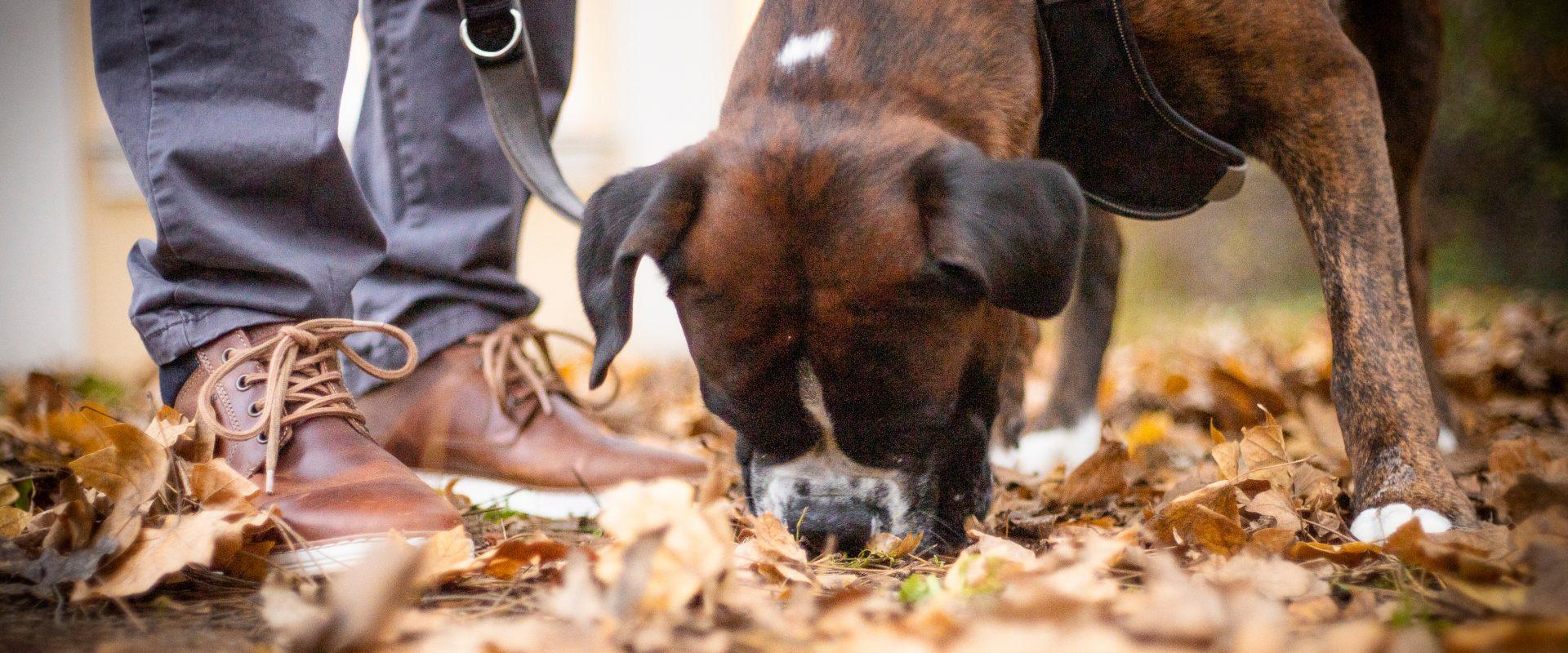 Willkommen bei den FellRebellen - Hundetraining und Beratung