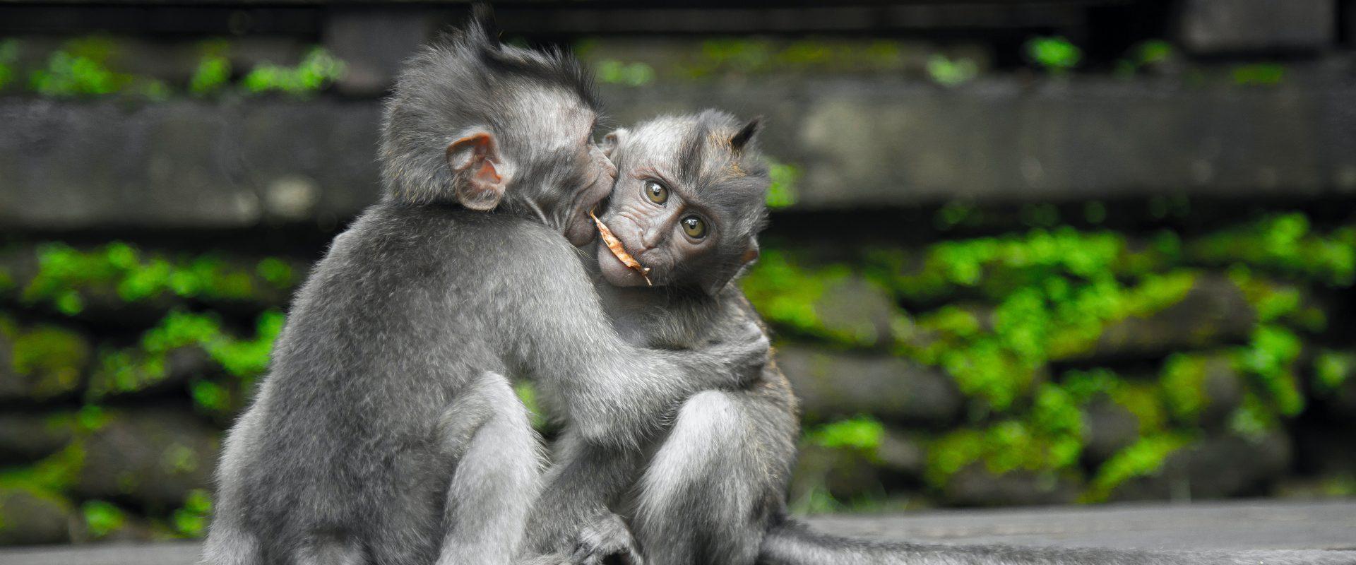Welttierschutztag 2020 h